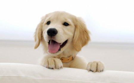Собака для дитини. Собака для квартири. Відгуки
