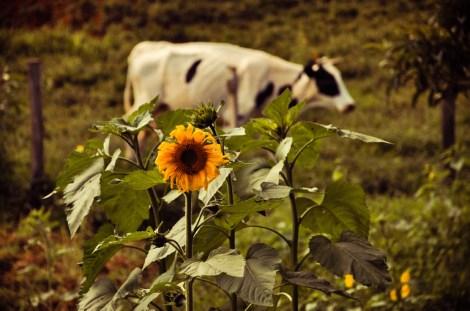 Todos os produtos, inclusive os de origem animal, são feitos na própria fazenda