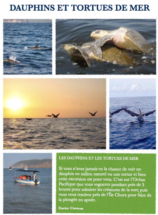 samara-dauphins