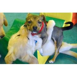 Small Crop Of Dog Licking Air