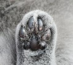 Bottom of a furry cat paw