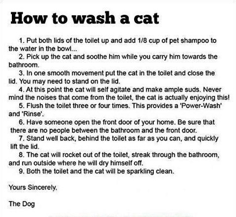 Wash a Cat copy