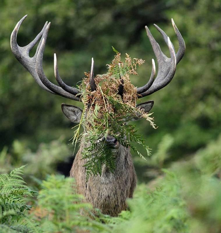«Если кто спросит — вы меня не видели». (Фото William Richardson Comedy Wildlife Photography Awards).