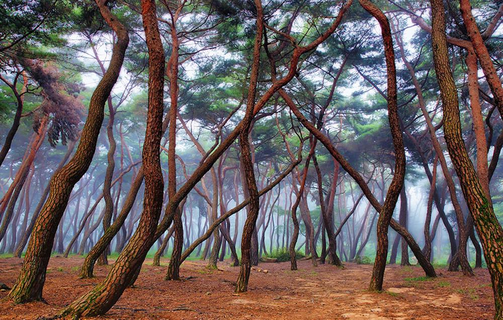 Туманный лес.