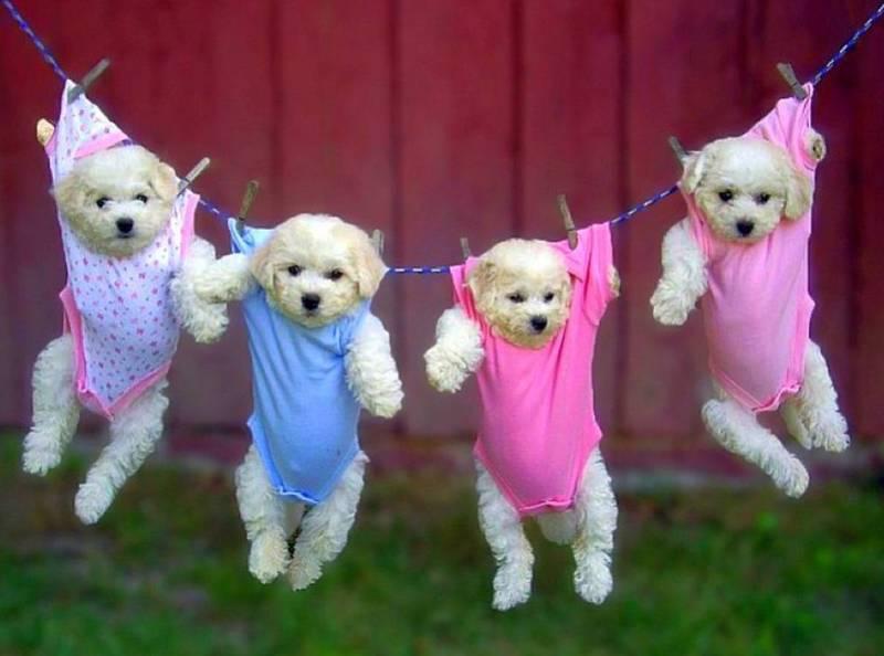 Собаки на верёвке