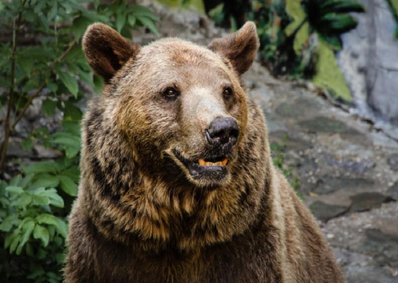 Медведь гризли. Фотоисточник
