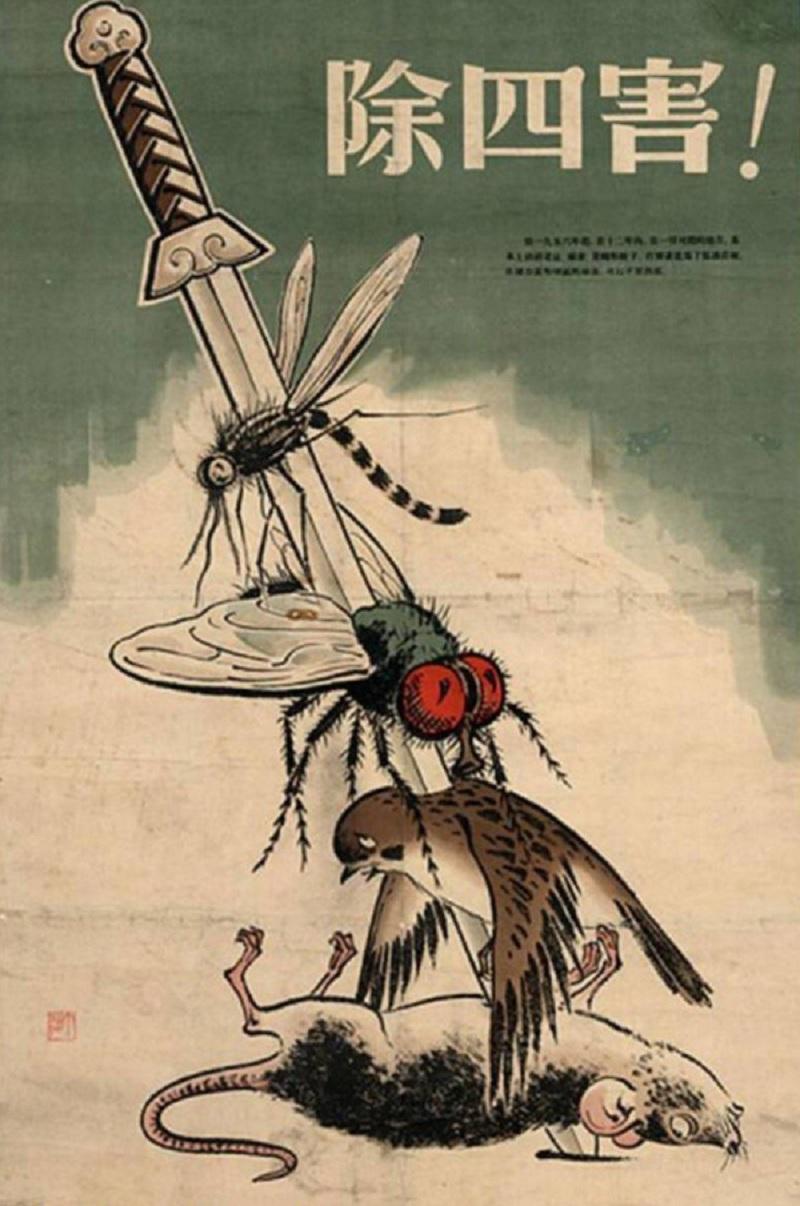 Уничтожение воробьев в Китае, Воробьи в Китае, коммунистическая агитация