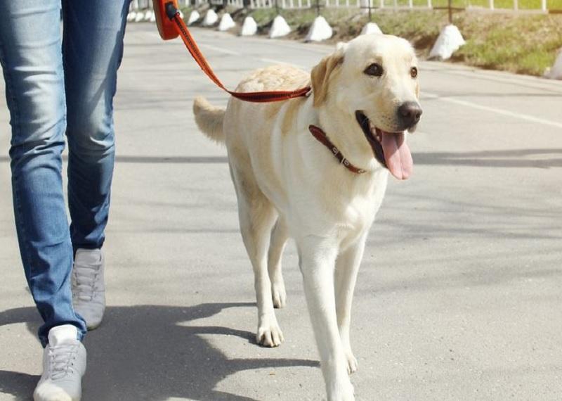 Франция защита прав животных, бродячие собаки, бездомные животные