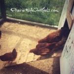 Mother Hen: Update