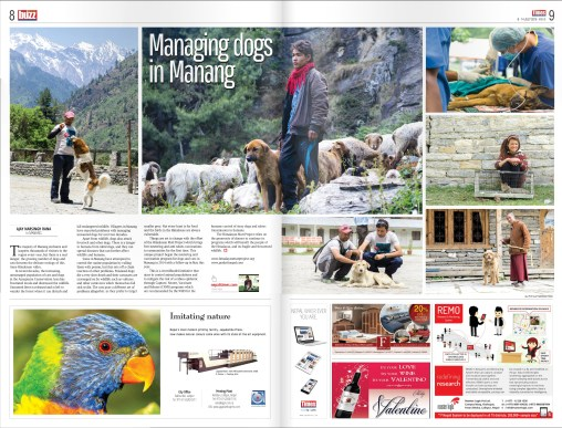 Neuter dogs in Manang