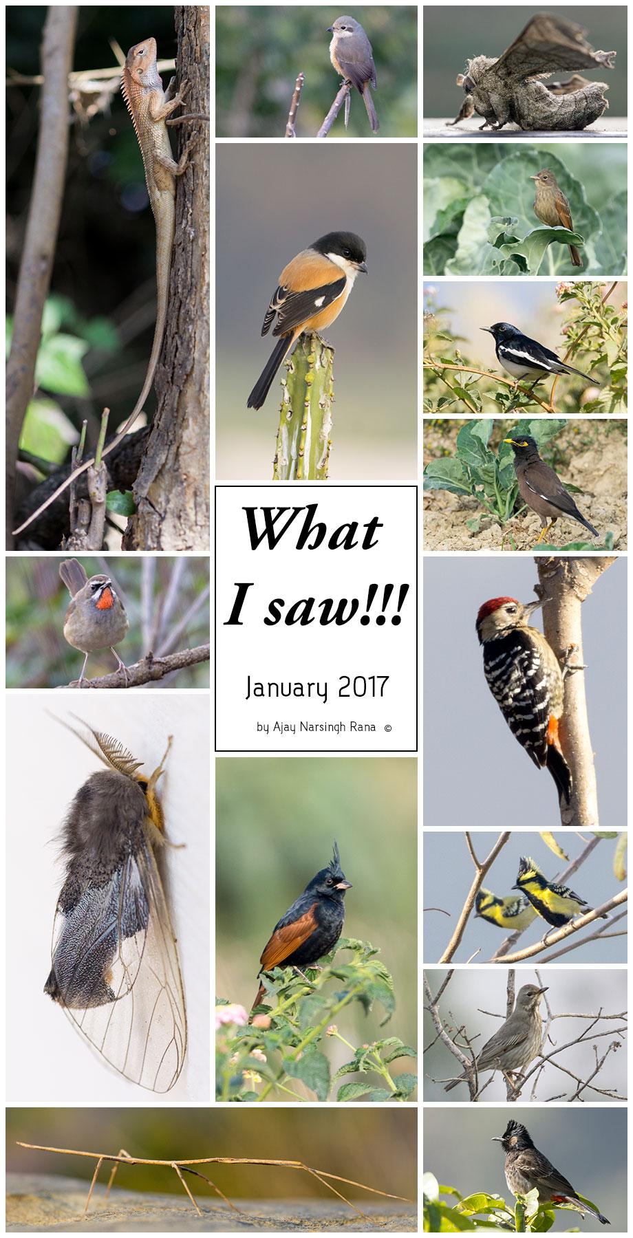 what i saw- january 2017