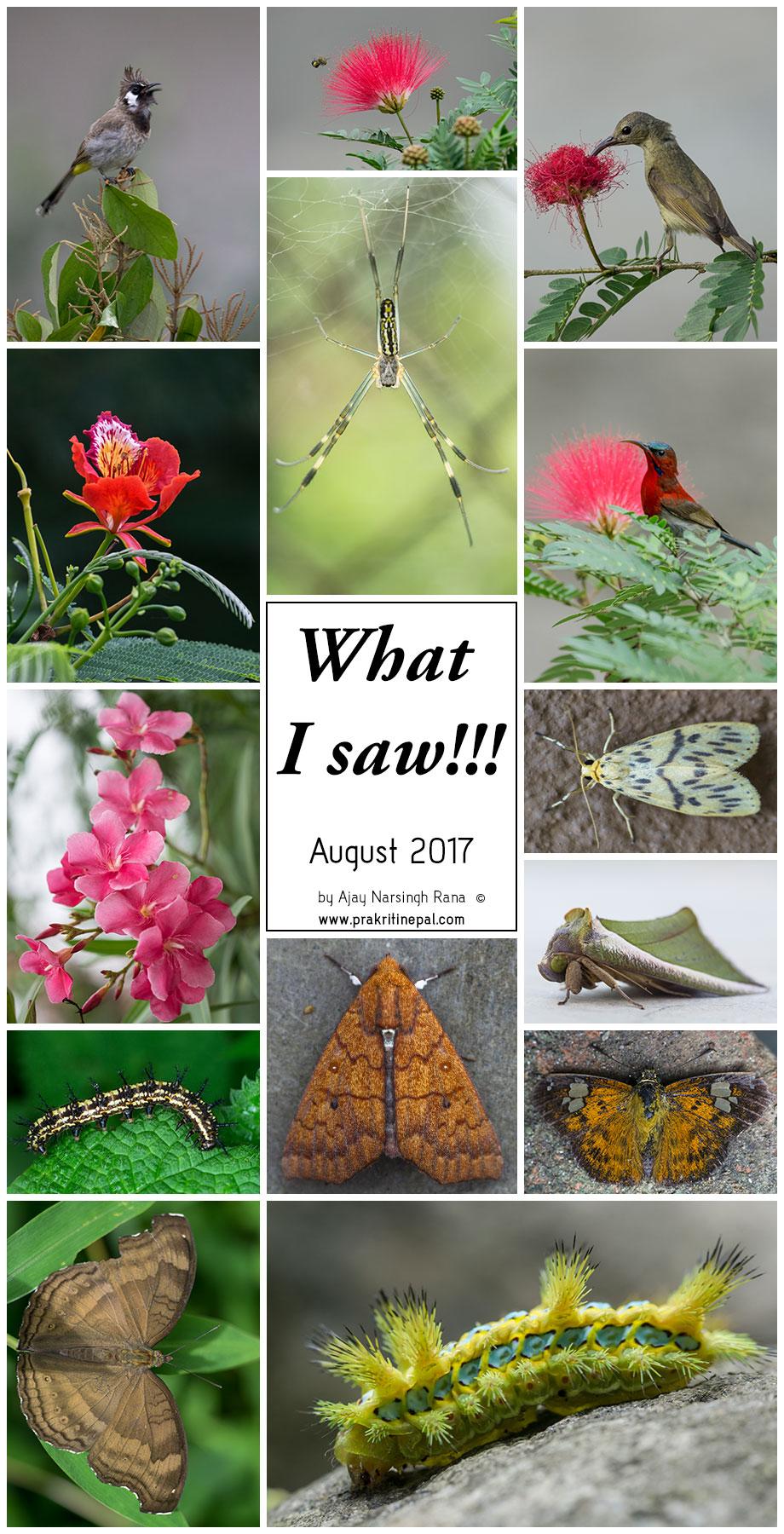 Prakriti-Nepal_What-i-saw-in-August-2017