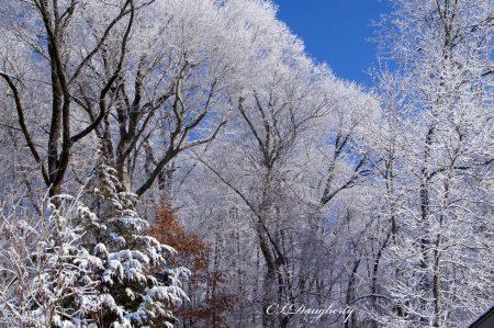 snowy tree blue sky