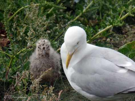 Mom and baby bird