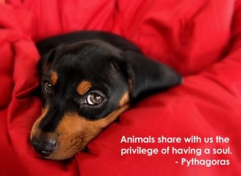Pythagoras was a dog lover