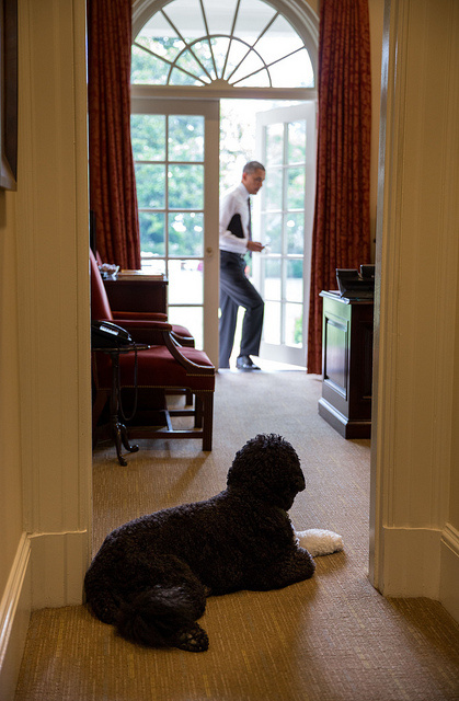 Bo obama photos presidential pet museum - When is obama going to be out of office ...