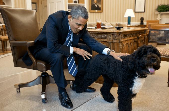 President Obama's Dog, Bo