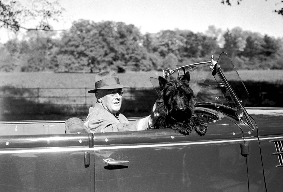 FDR in Automobile With His Dog Fella