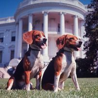 him-and-her-beagles-johnson