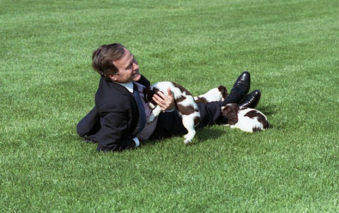 President Bush plays with Millie and her puppies.