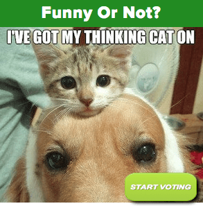 Is this photo funny? Click to vote.