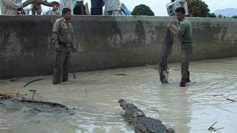 Das persische Krokodil (Dokumentation, Regie: Houchang Allahyari, 09.05.)