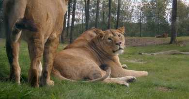 Safaripark Beekse Bergen korting trip report blog 5