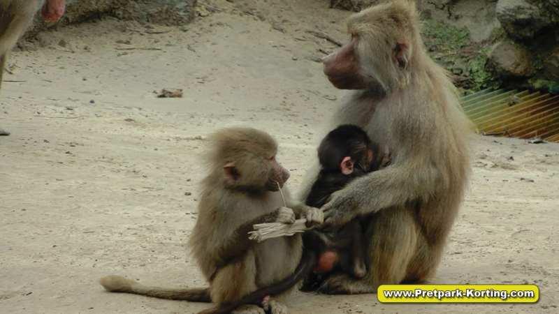 Safaripark Beekse Bergen korting trip report blog 13