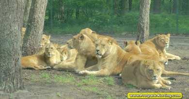 Serengeti Park dierentuin attracties duitsland report 19