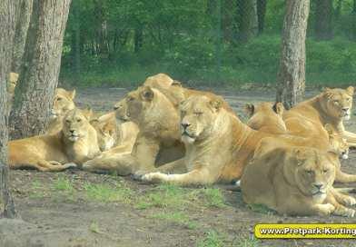 Dagje dierentuin in Duitsland, Serengeti Park – verrassend divers!
