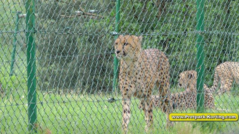 Serengeti Park dierentuin attracties duitsland report 3