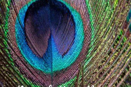 pea home decor ideas for pea theme home