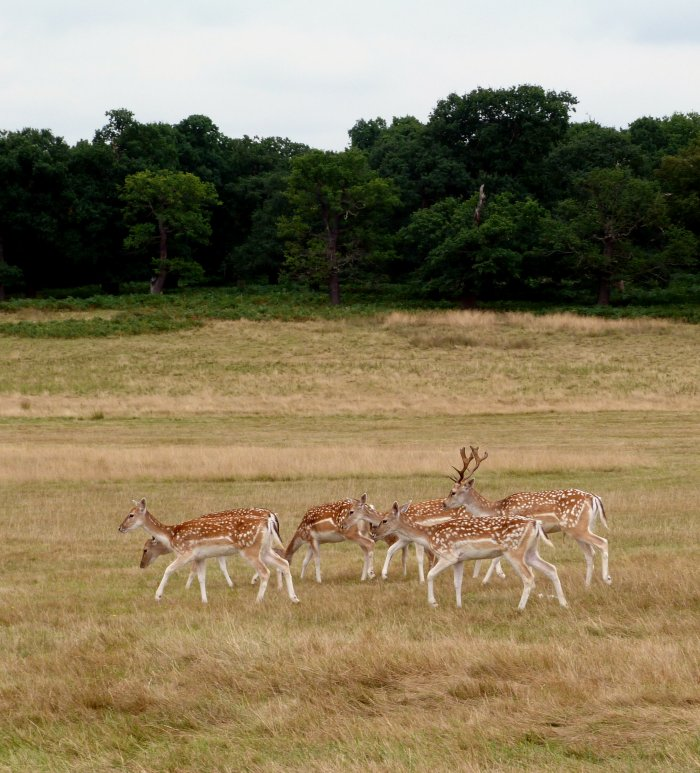 faune richmond park