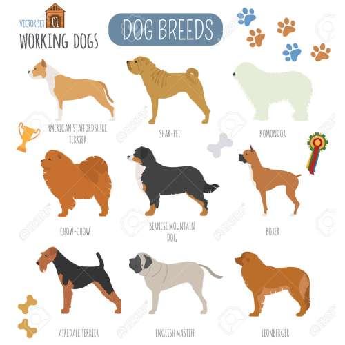 Medium Crop Of Working Dog Breeds
