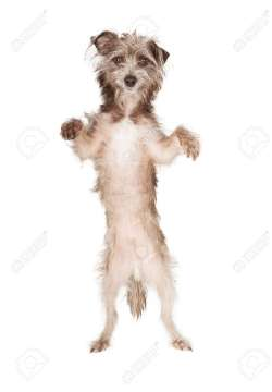 Small Of Dog Standing Up