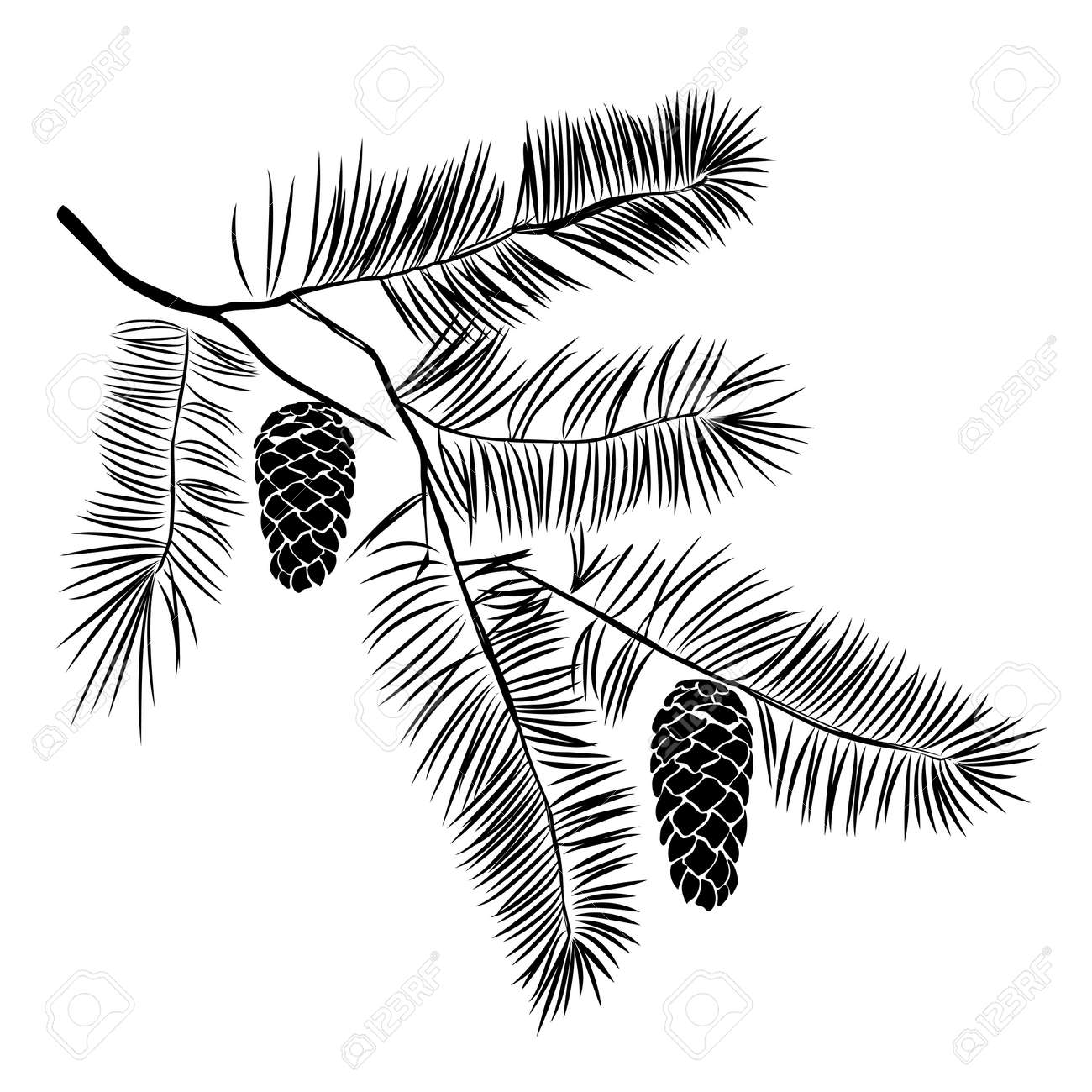 Seemly Hand Drawn Pine Tree Branch Isolated On Ink Illustrationin Vintage Engraved Style Hand Drawn Pine Tree Branch Isolated On Ink Pine Tree Branches Drooping Pine Tree Branches Turning Black houzz-03 Pine Tree Branch
