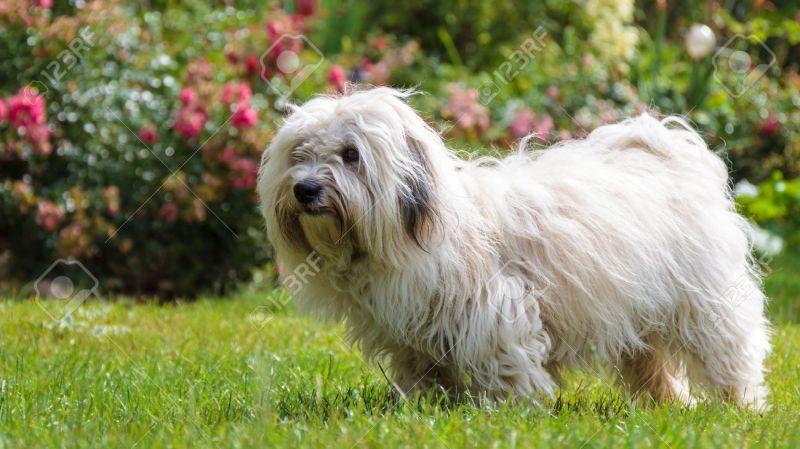 Large Of Long Hair Dog