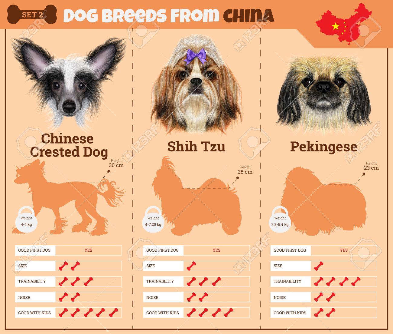 Fullsize Of Chinese Dog Breeds