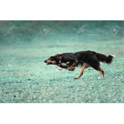 Graceful A Fast Dog Running On Grass Stock Photo A A Fast Dog Running On Grass Stock How Fast Does A Dog Run 100m How Fast Can A Dog Run Km H A