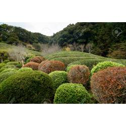 Small Crop Of Japanese Garden Plants
