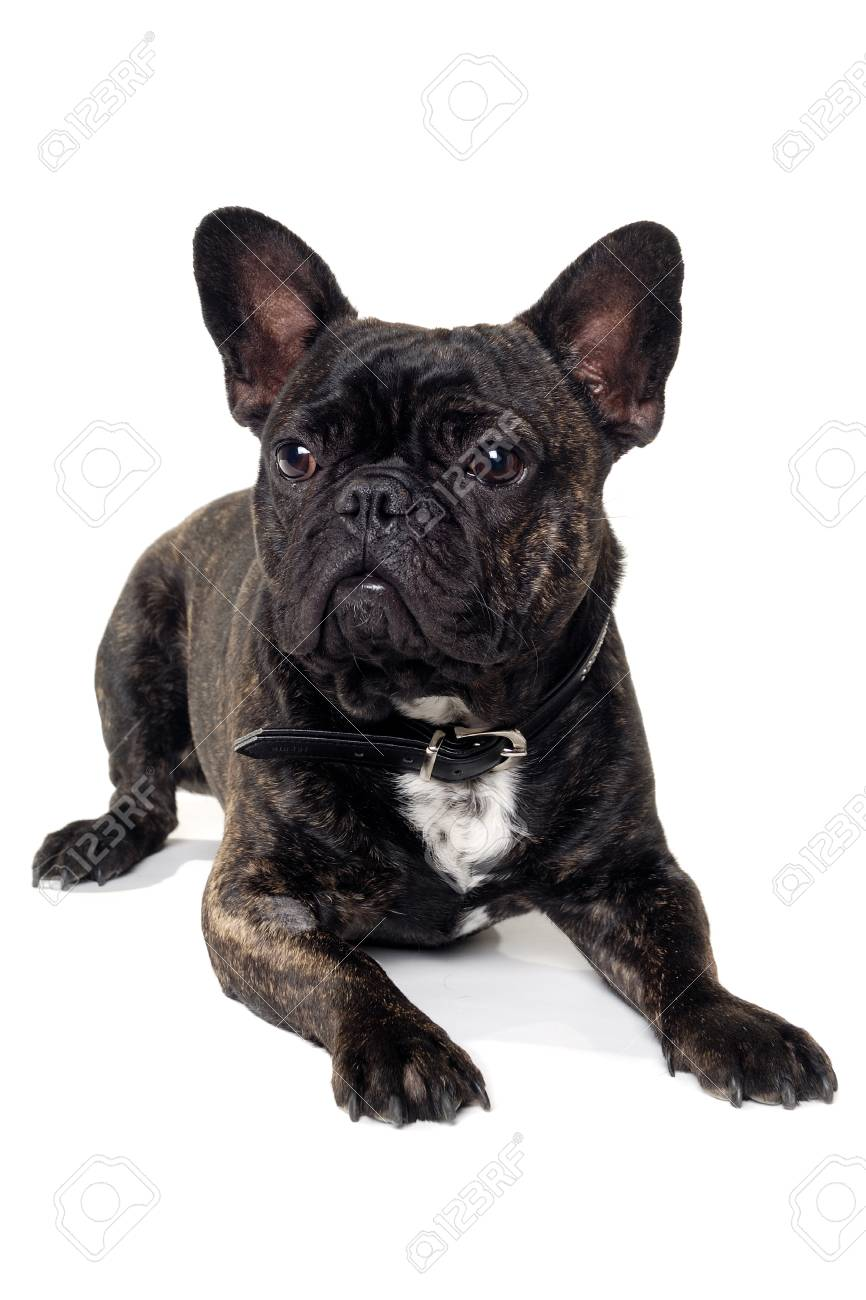 Fullsize Of French Dog Names