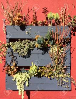 Small Of Succulent Hanging Garden