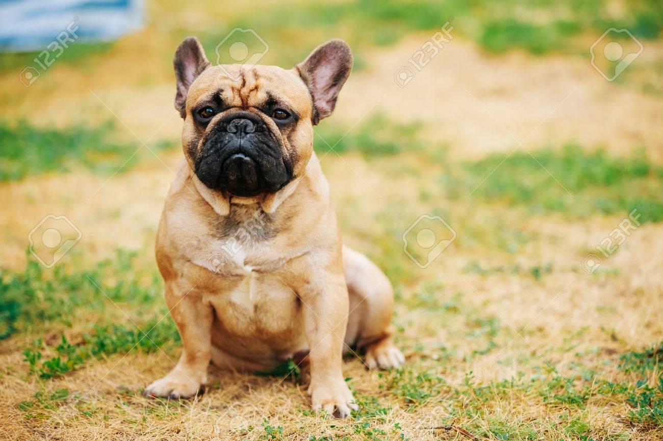 Fullsize Of Dog In French