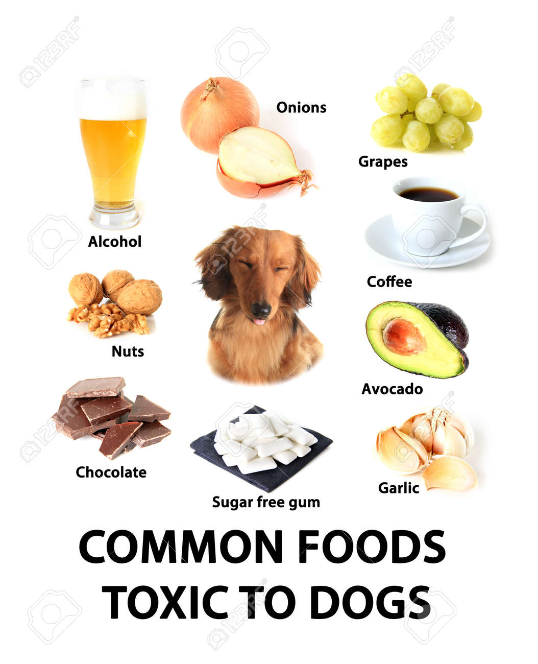 Cosmopolitan Toxic Foods Cats Are Avocados Toxic Dogs Dogs Stock Royalty Free Is Avocado Safe Chart Toxic Foods Stock Photo Chart bark post Are Avocados Bad For Dogs