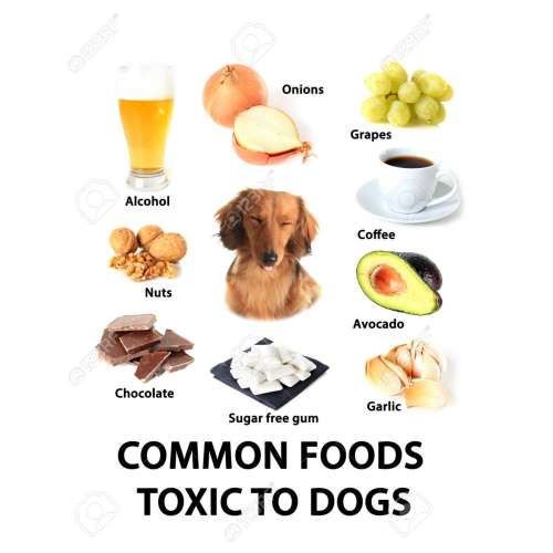 Medium Crop Of Are Avocados Bad For Dogs