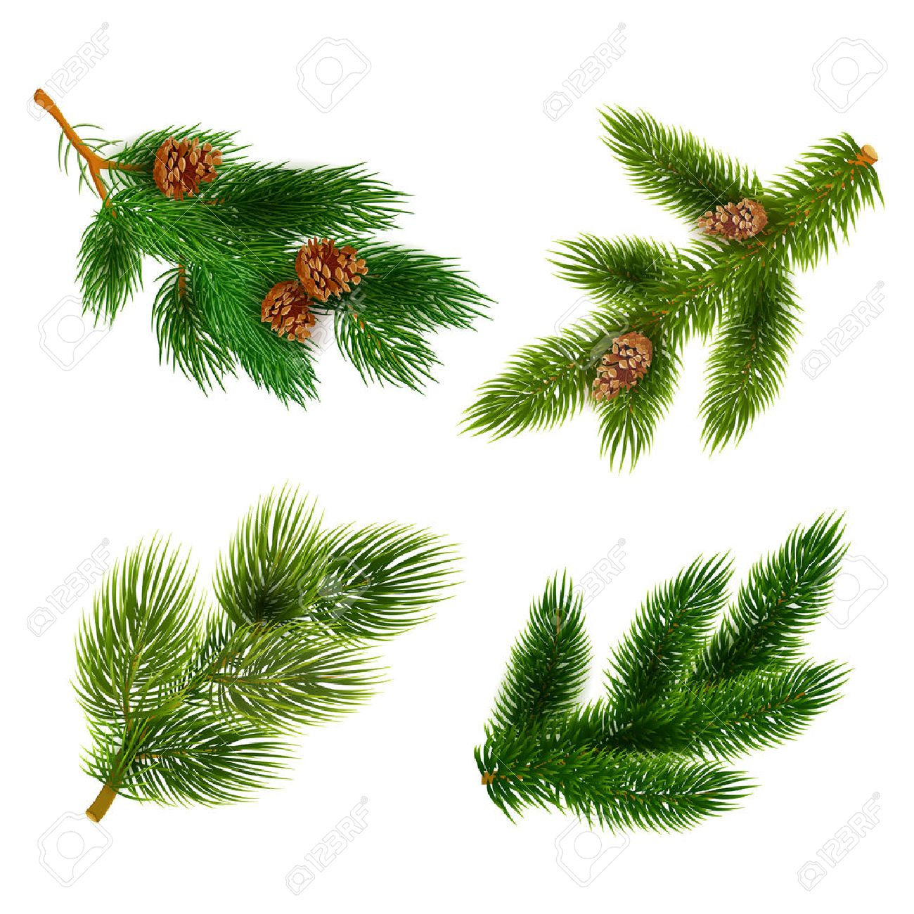 Classy Cones Chrismas Decorations Icons Setcomposition Banner Realistic Abstract Vector Pine Tree Branches Chrismas Decorations Icons Pine Tree Branches Cones houzz-03 Pine Tree Branch