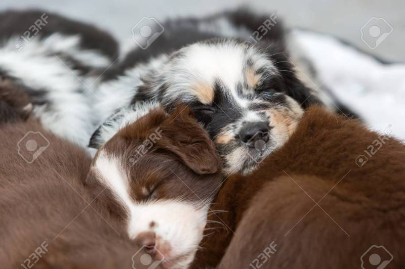 Large Of Cute Puppies Sleeping