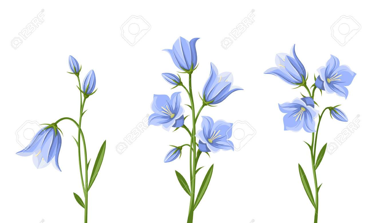 Grand Blue Bluebell Flowers Isolated On A Royalty Blue Bell Flowers Photos Blue Bell Flower S Blue Bluebell Flowers Isolated On A Stock Vector Set Set houzz-03 Blue Bell Flower