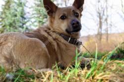 Gray India 20 Most Loyal Dog Breeds Dog Most Loyal Friend Stock Photo Dog Most Loyal Friend Stock Royalty Most Loyal Dog Breeds