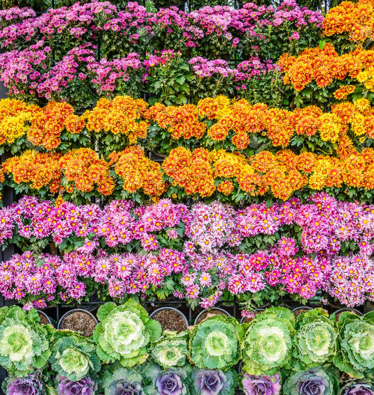 High Background Stock Vegetables That Decorated Backdrop Colorfulflowers Background Stock Photo Vertical Garden Floral Design Vertical Garden Floral garden Vegetable Vertical Garden